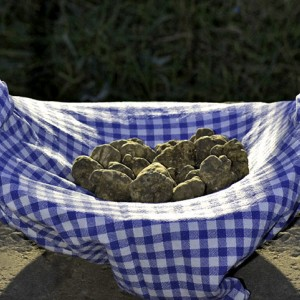 The Istrian truffle