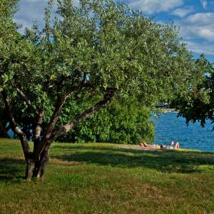 Poreč is keeping up with nature