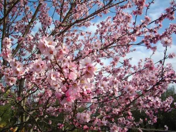 Spring in Poreč