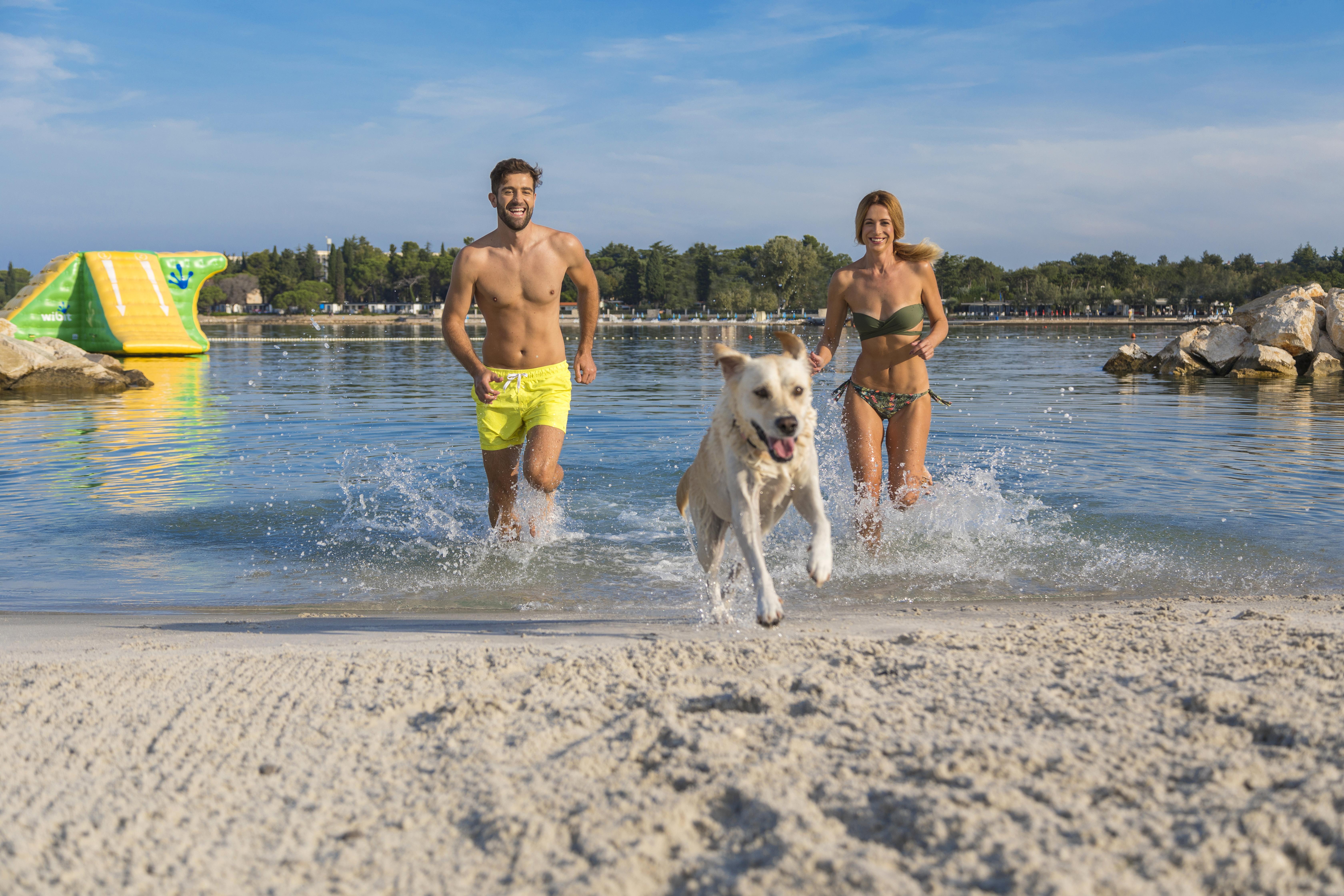 Domande Al Veterinario Cane pet friendly parenzo istria – portale ufficiale dell'ente