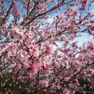 Proljeće u Poreču
