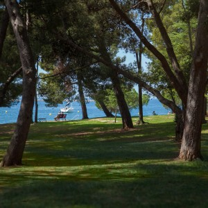 Walking In the shade of the evergreen (Poreč - Plava Laguna)