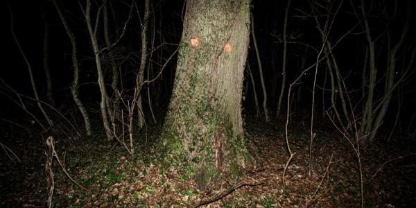 Dino Šertović. Trees